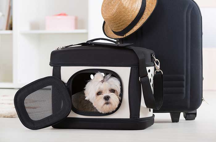 dog in a carry case