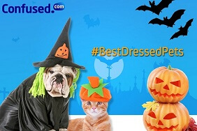 best dressed pet competition