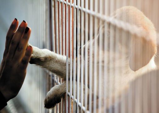 A dog reaching through a kennel to touch a hand