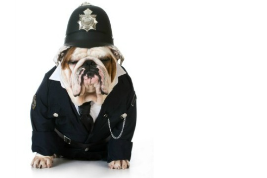 A dog in a police uniform