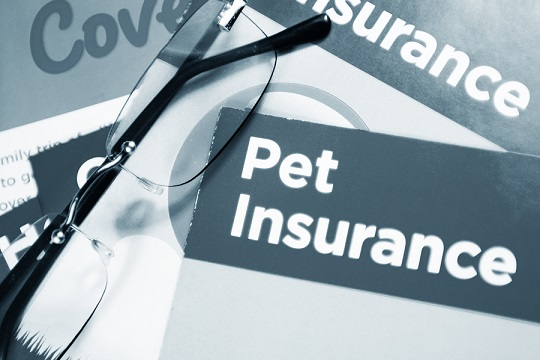 pet insurance policy